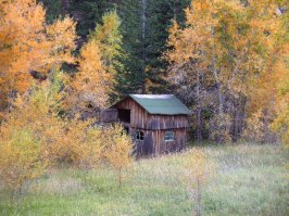 Old Shed in the Fall